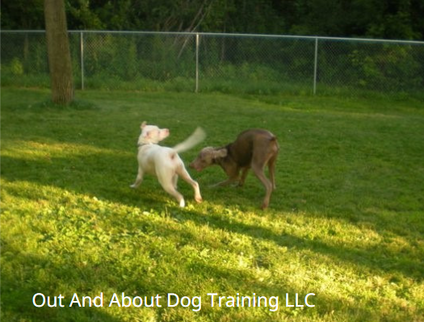 Out And About Dog Training LLC