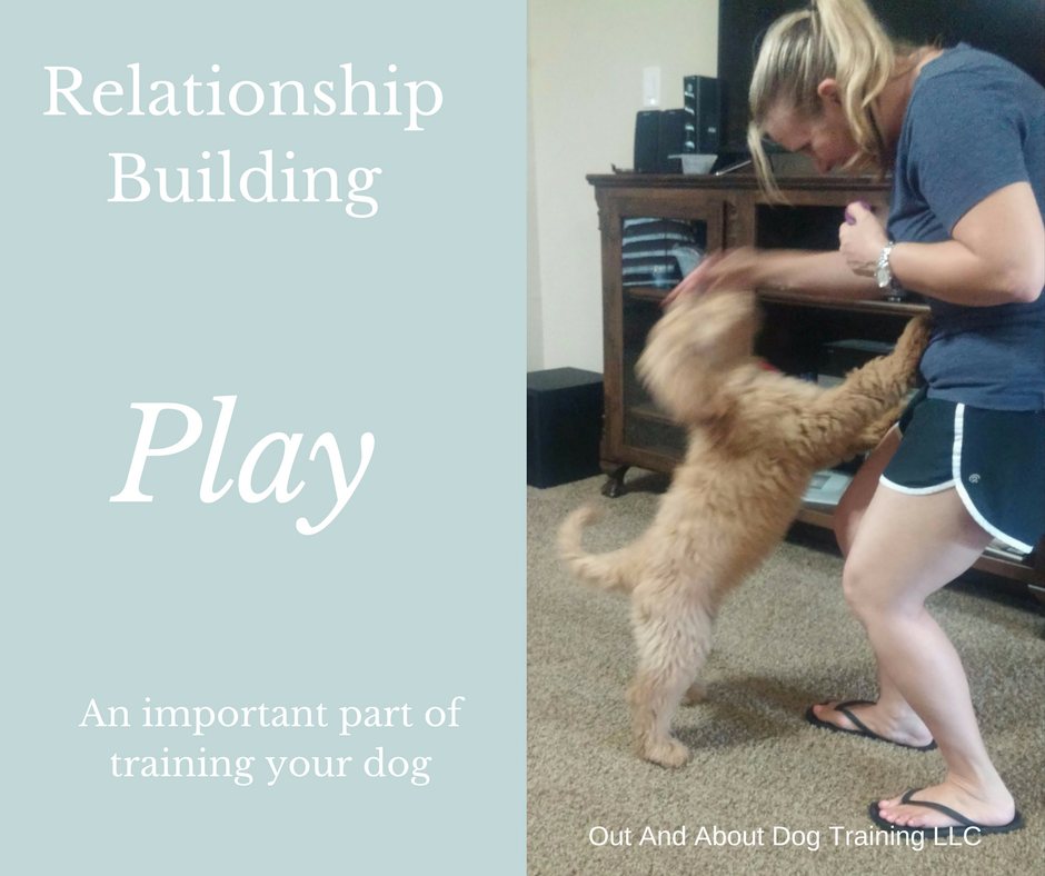 Play to Train Your Dog